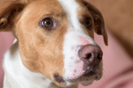 Dogs of the World portfolio