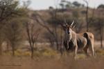 Antelope portfolio