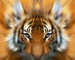 Wildlife and Animals: Art portfolio