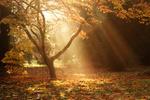 Westonbirt Arboretum portfolio