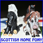 SCOTTISH HOME PONY  - MORRIS EC