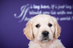 Sapphire's pups portfolio