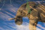 Elephant portfolio