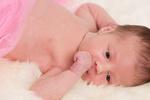 The Baby portfolio