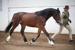 LINKS TO - Equestrian Events March'12 portfolio