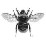 Bees portfolio