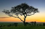 Sarengeti & Ngorongoro Crater portfolio