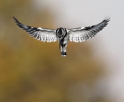 Feathered Friends portfolio