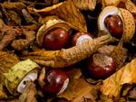 Autumn portfolio
