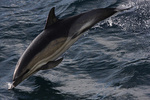 Marine Mammals portfolio