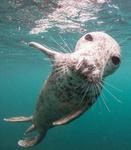 Grey Seals portfolio
