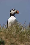 Sea Birds. Waders & Waterfowl portfolio