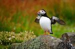 Wildlife photography portfolio