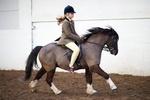 LINKS TO - Equestrian Events Feb '12 portfolio