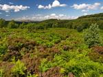 Wharncliffe Heath