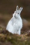 Mountain Hare portfolio