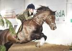 LINKS TO - Equestrian Events Jan '12 portfolio