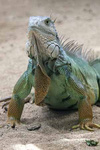 Reptiles portfolio