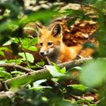 Other Wildlife portfolio