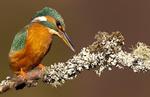 THE BIRD GALLERY portfolio