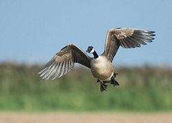 Canada Goose portfolio