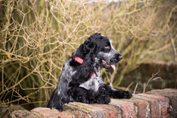 Oscar the Spaniel's Photographs portfolio