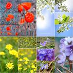 Wildflowers | Wildblumen portfolio