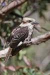 Birds of Australia. portfolio