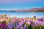New Zealand portfolio