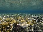 Red Sea / Sinai Peninsula portfolio