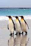 Penguins portfolio