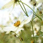 Summer Garden portfolio