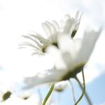 Wild Flowers portfolio
