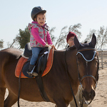 Hobby Farm Pony Ride portfolio