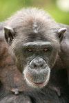 Primates portfolio