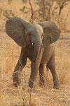 Elephants portfolio