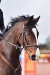 Downe Farm Eventers Challenge 180218 Click to Enter portfolio