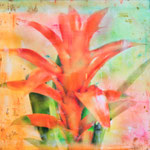 Veiled Flowers portfolio