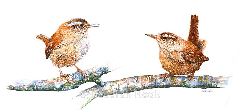 Pair of wrens - Birds