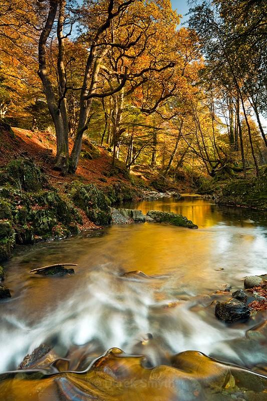 Golden Autumn Reflection