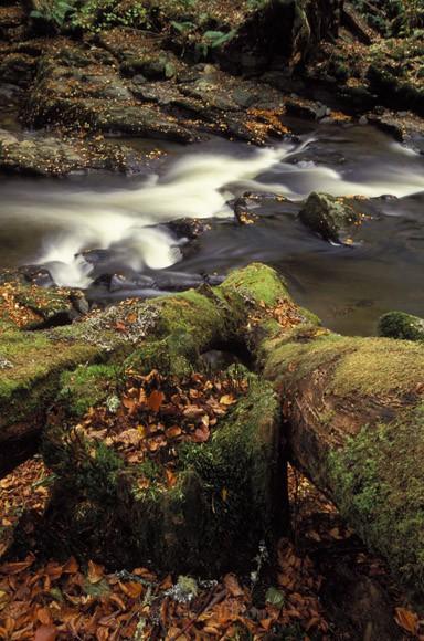 Fallen trunk - Perthshire