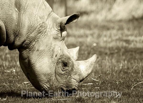 White Rhino 2 - Around The World