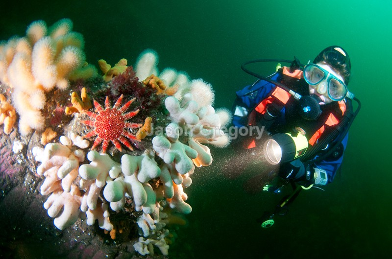 Diver observes reef 1 - Diver exploring marine environment