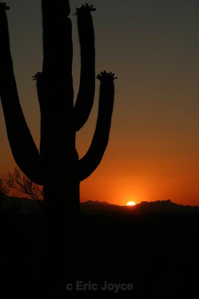Saguaro Sunset II - Tuscon, Arizona