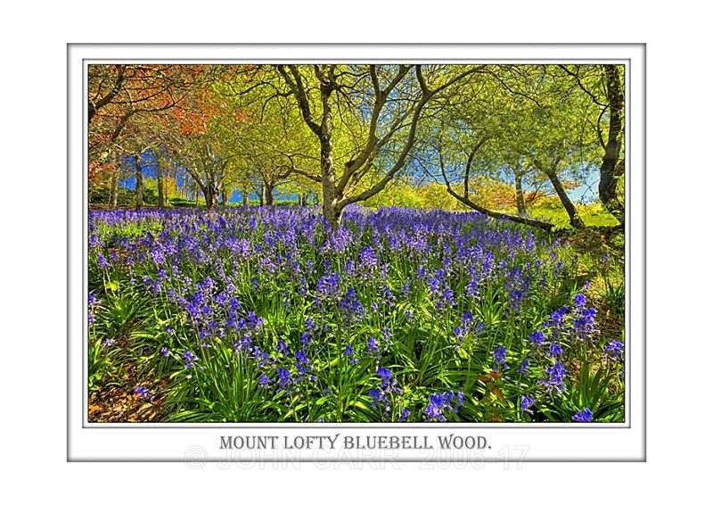 Beautiful Wall Art print  with a Border, showing rarely seen Bluebells in the Adelaide Hills, South Australia.