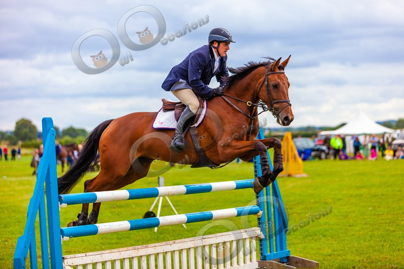 Eventing horse_3286 - Pet Photography