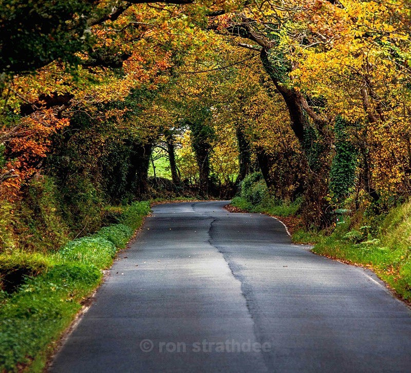 Tunnel of Autumn Colours - Land of Man