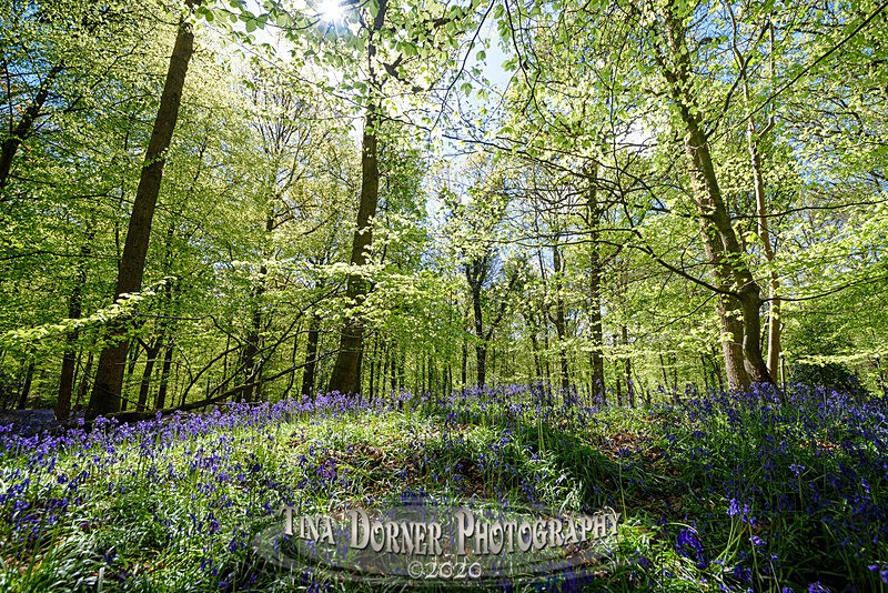 Dancing Bells - Spring & Summer in The Forest of Dean & Wye Valley and BLUEBELLS!
