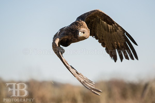 wow march 16 Photo day-114 - Birds of Prey