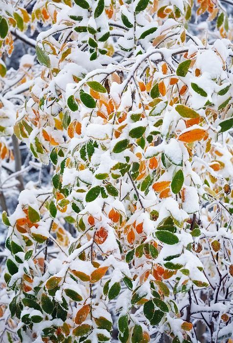 Autumn Colours - Photographs of Slovakia